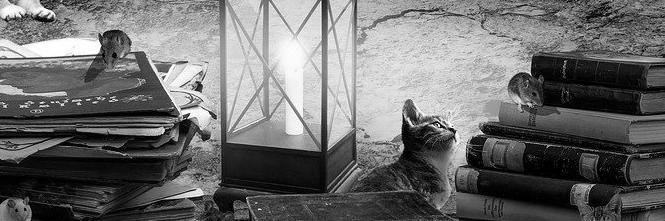 Aménagement de combles à Auriol 13390 | Isolation sous toiture