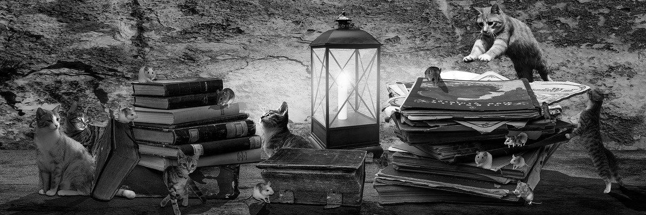 Aménagement de combles à Limoux 11300 | Isolation sous toiture
